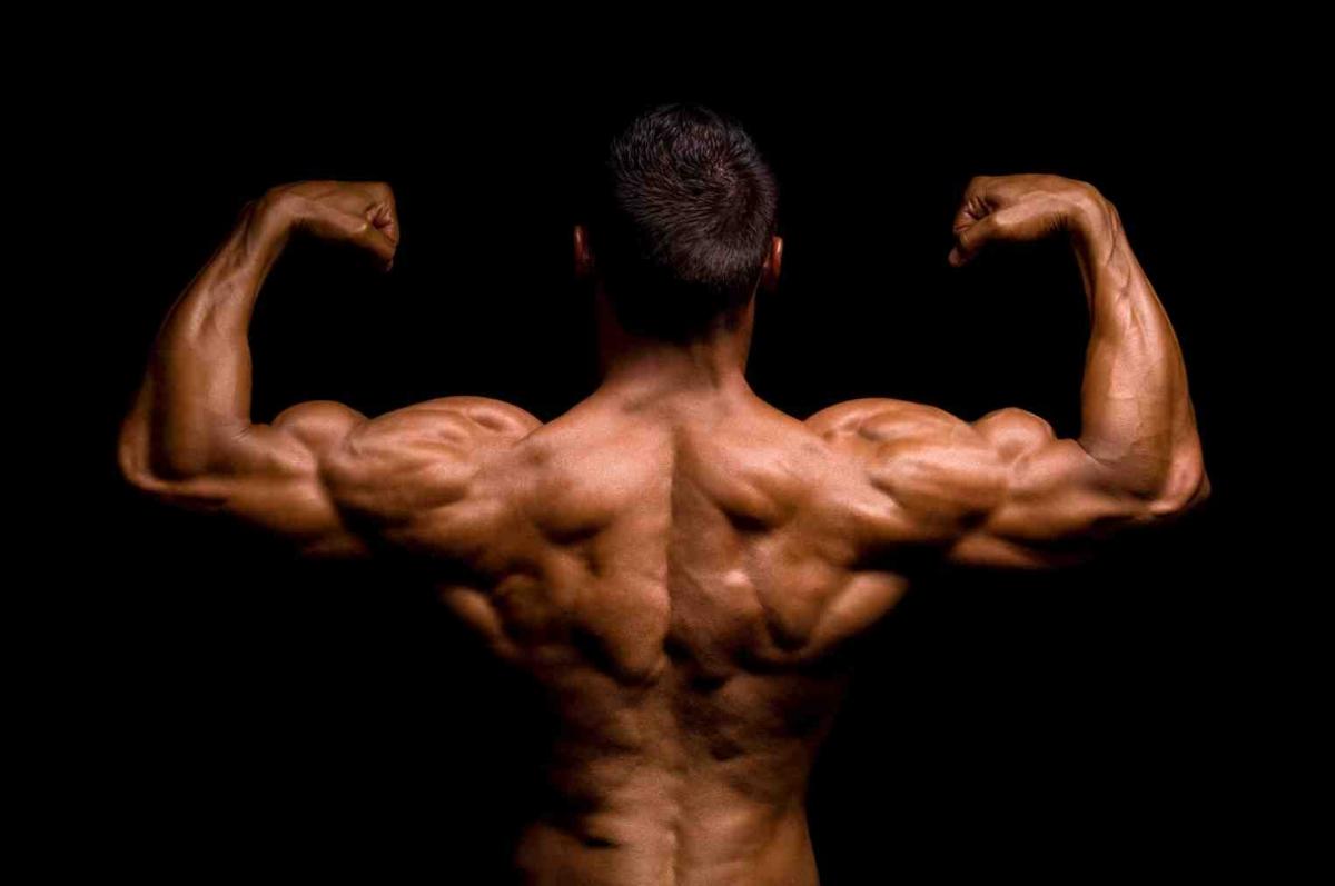 Fibre muscolari e ipertrofia