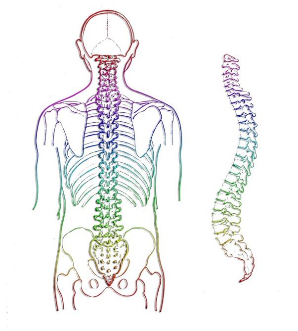 Colonna vertebrale: fisiologia e esercizi con i sovraccarichi