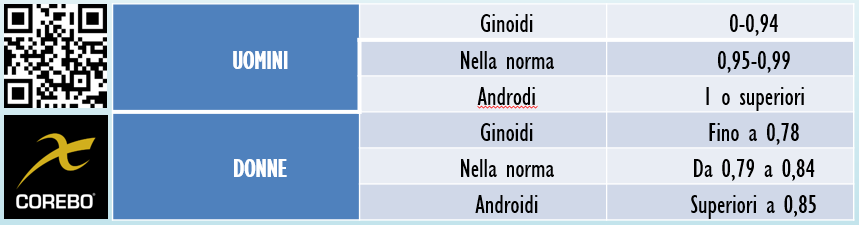 ginoide androide