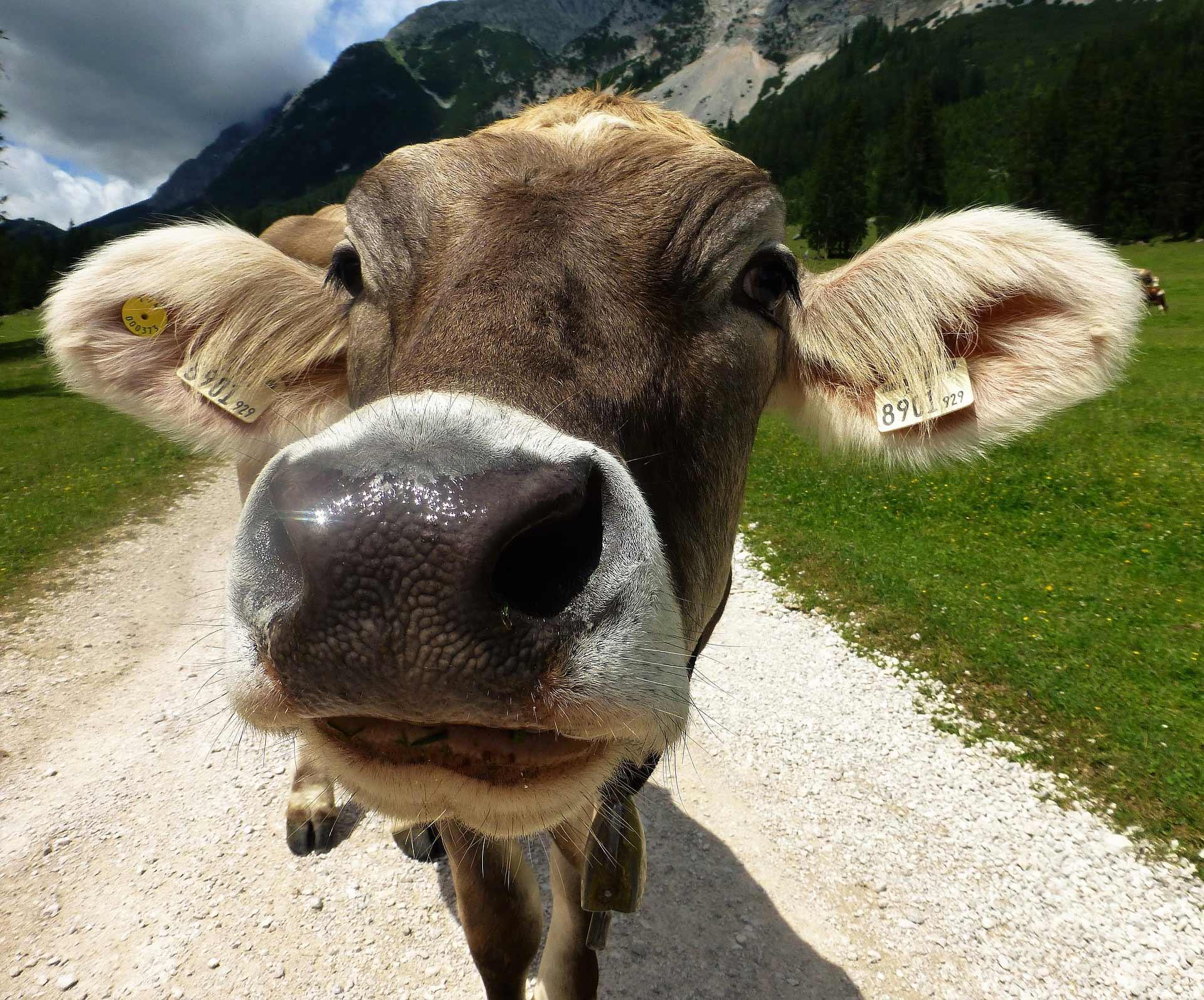Latte: 5 bufale, come evitare frustrazioni alimentari