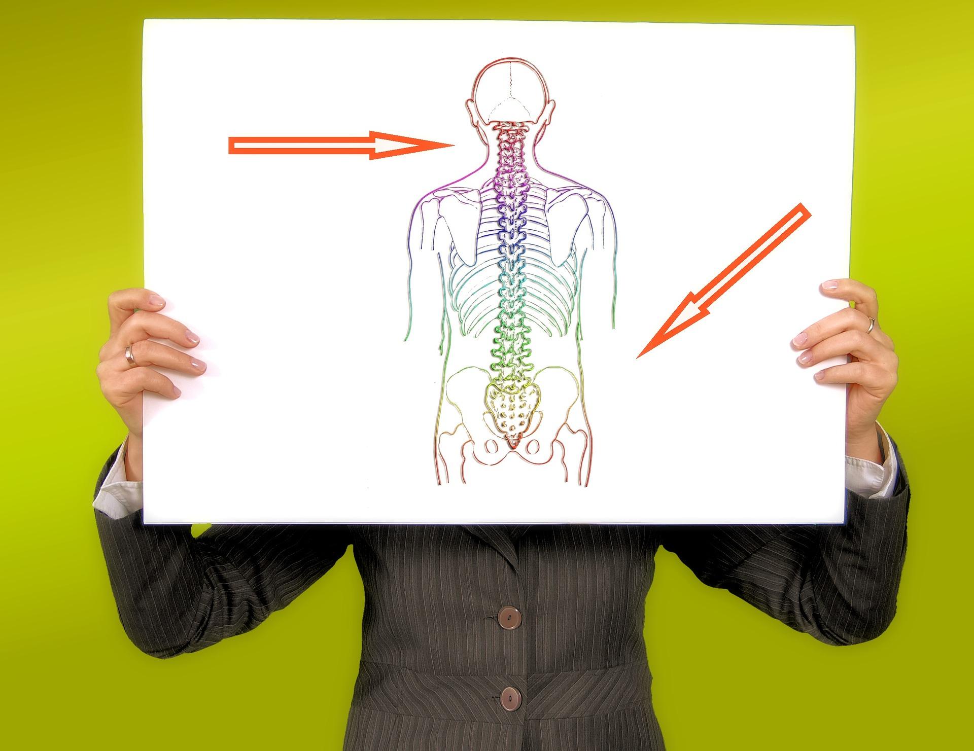 La colonna vertebrale: anatomia e concetti chiave