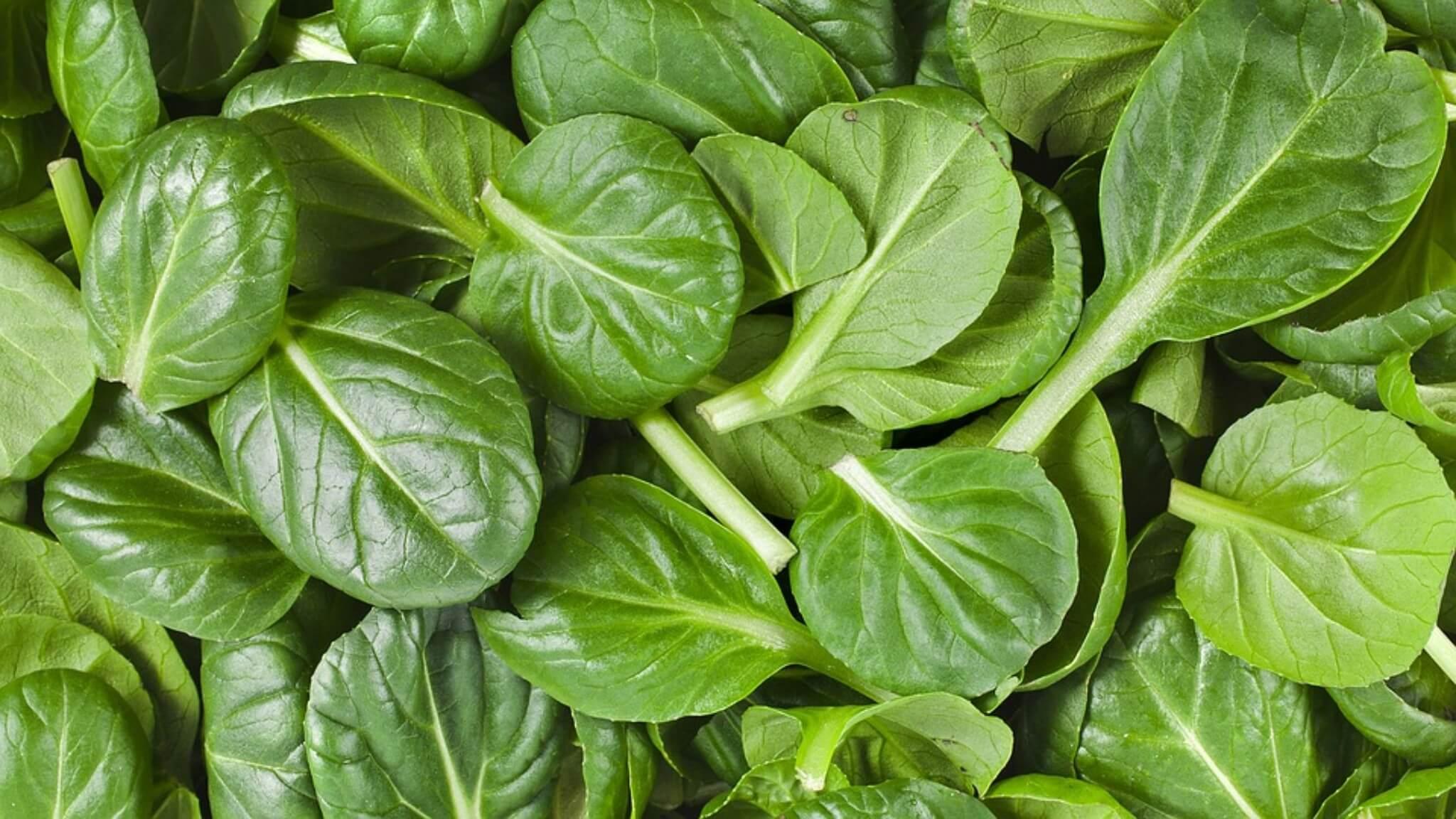 Vitamina B9 - Acido folico: metabolismo, funzioni e fabbisogno