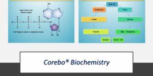 Corso di Biochimica: Introduzione ai processi fisiologici
