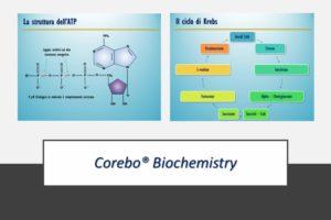 Corebo e Biochimica
