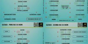 Glicolisi - La Guida: conoscerla e comprenderla