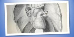 Alla scoperta dell'apparato respiratorio