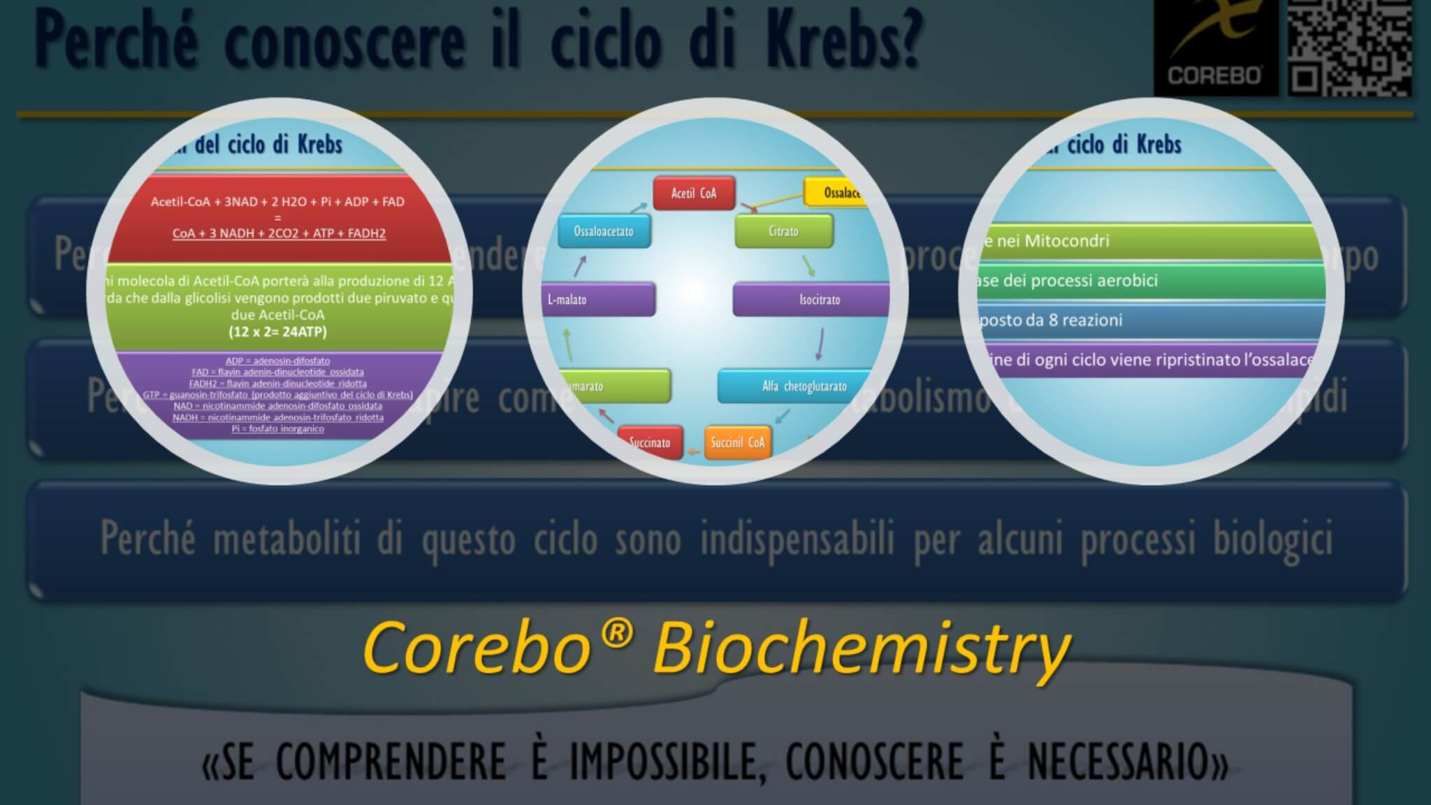 Il Ciclo di Krebs - Il corso di Biochimica per conoscere e comprendere