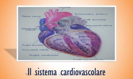 Il sistema cardiovascolare, la guida per conoscerlo