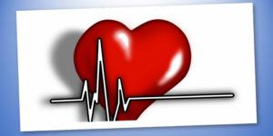 Apparato cardiovascolare, la guida per conoscerlo