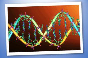 Codice genetico – Che cos'è e come ci influenza – Le guide Corebo(R) (1)