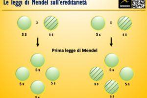 Le leggi di Mendel – Le guide Corebo(R)
