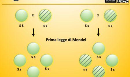 Leggi di Mendel – Cosa sono e cosa servono?