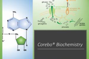 Trasportatori di membrana – Corebo(R) Biochemistry