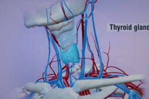 Asse Ipotalamo Ipofisi Tiroide – Le guide Corebo(R)