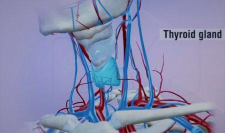 Asse ipotalamo ipofisi tiroide – Le guide Corebo