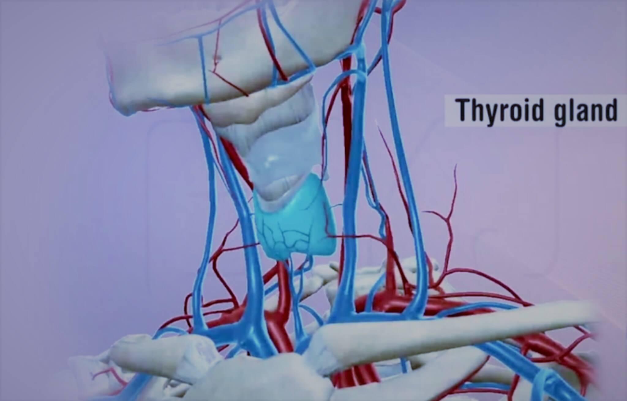 Asse ipotalamo ipofisi tiroide - Le guide Corebo
