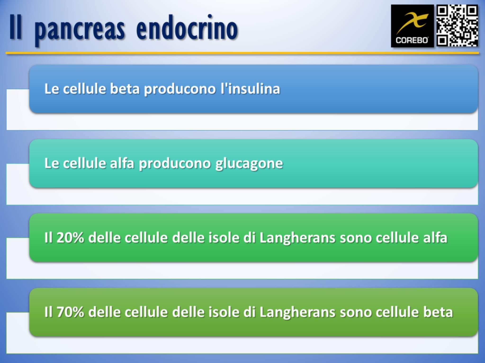 il pancreas endocrino