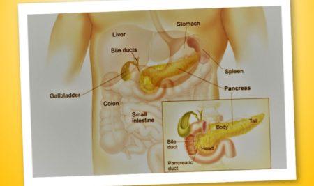 Il pancreas endocrino – Le guide Corebo