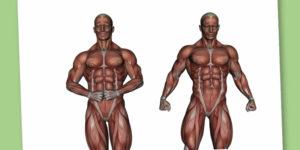 La classificazione dei muscoli: pillole di fisiologia