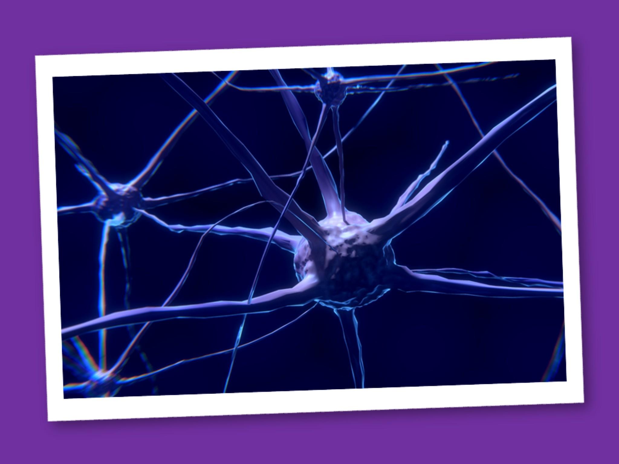 Il Sistema Nervoso: le sue cellule e la loro funzione