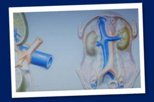 Il sistema renina angiotensia – Corebo(R)