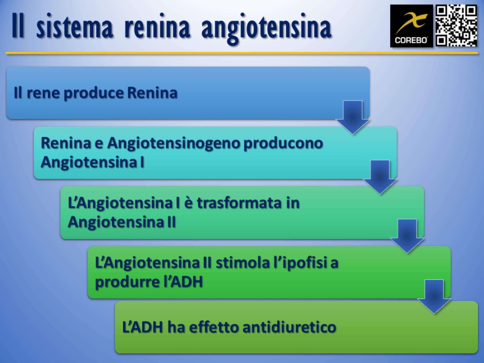 sistema renina angiotensina