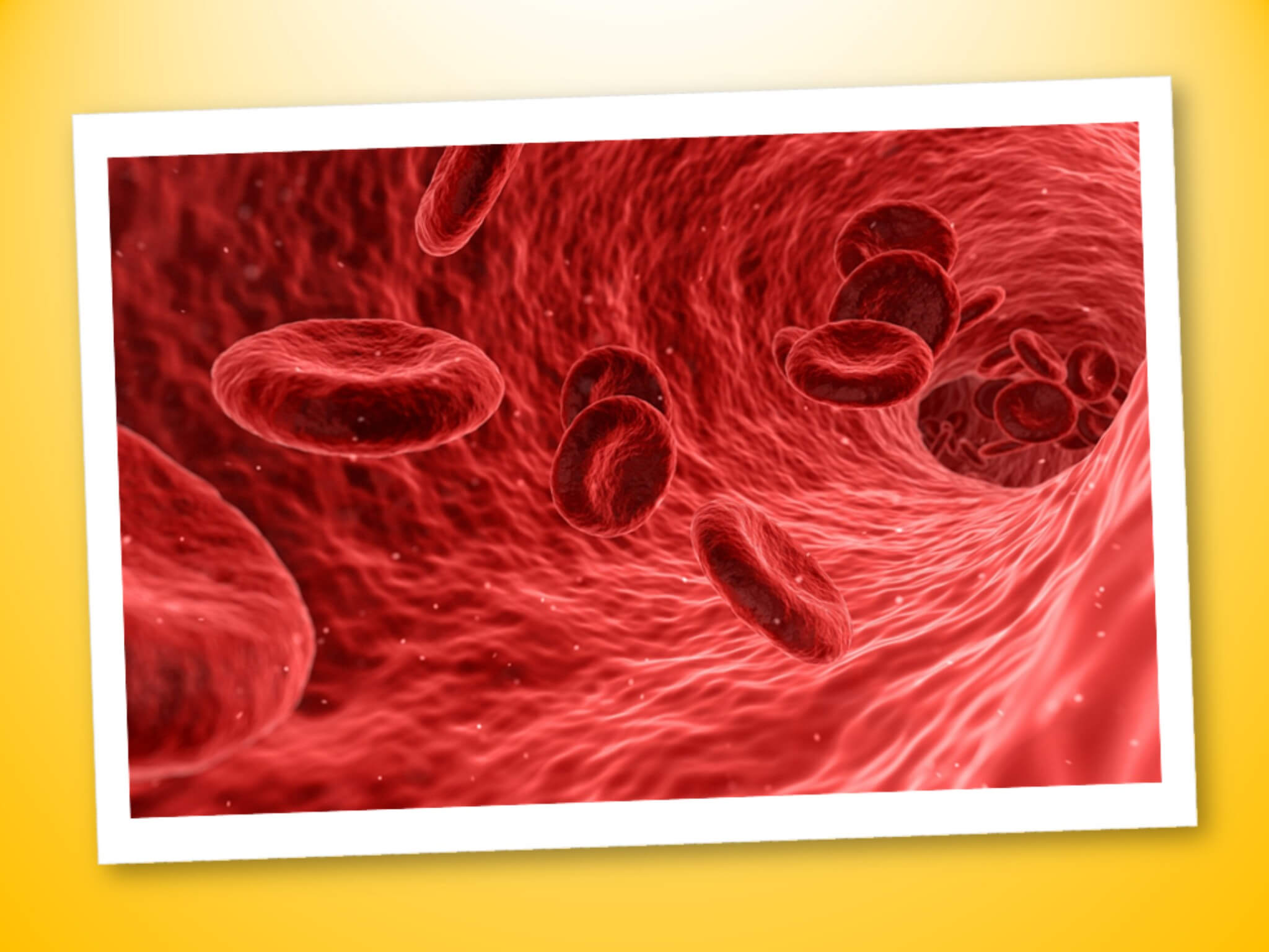 Il sangue: funzioni e composizione del volume ematico