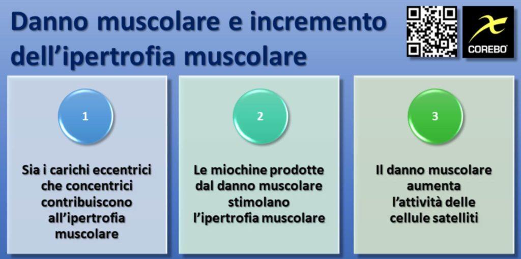 Ipertrofia muscolare e danno muscolare