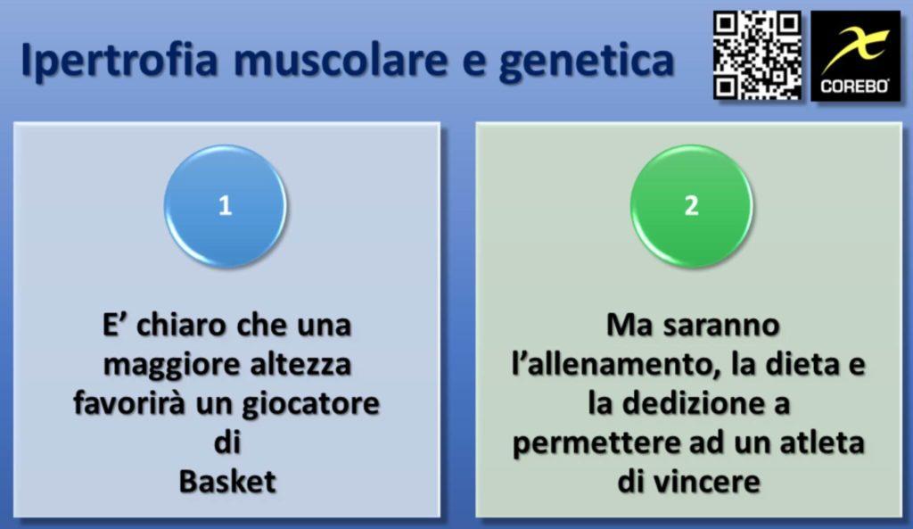 Ipertrofia Muscolare e Genetica