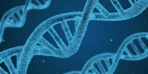 Ipertrofia muscolare e genetica: quanto conta veramente?
