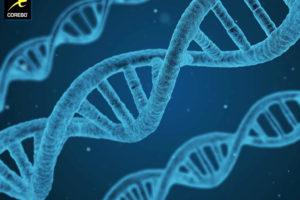 Ipertrofia Muscolare e Genetica cosa conta davvero – Corebo(R)