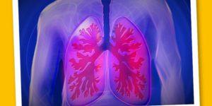 La Pleura: osteopatia e chinesiologia si incontrano