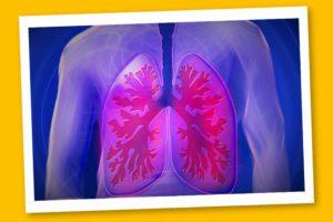 La Pleura osteopatia e chinesiologia si incontrano – Corebo(R)