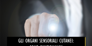 Gli organi sensoriali cutanei:  come funzionano?