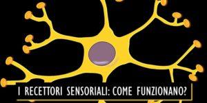Recettori sensoriali: come funzionano gli organi di senso