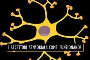 I Recettori Sensoriali come funzionano – Corebo(R)