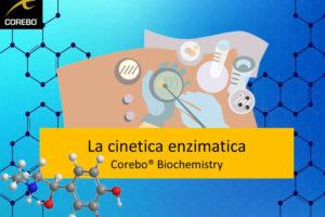 cinematica degli enzimi – Corebo