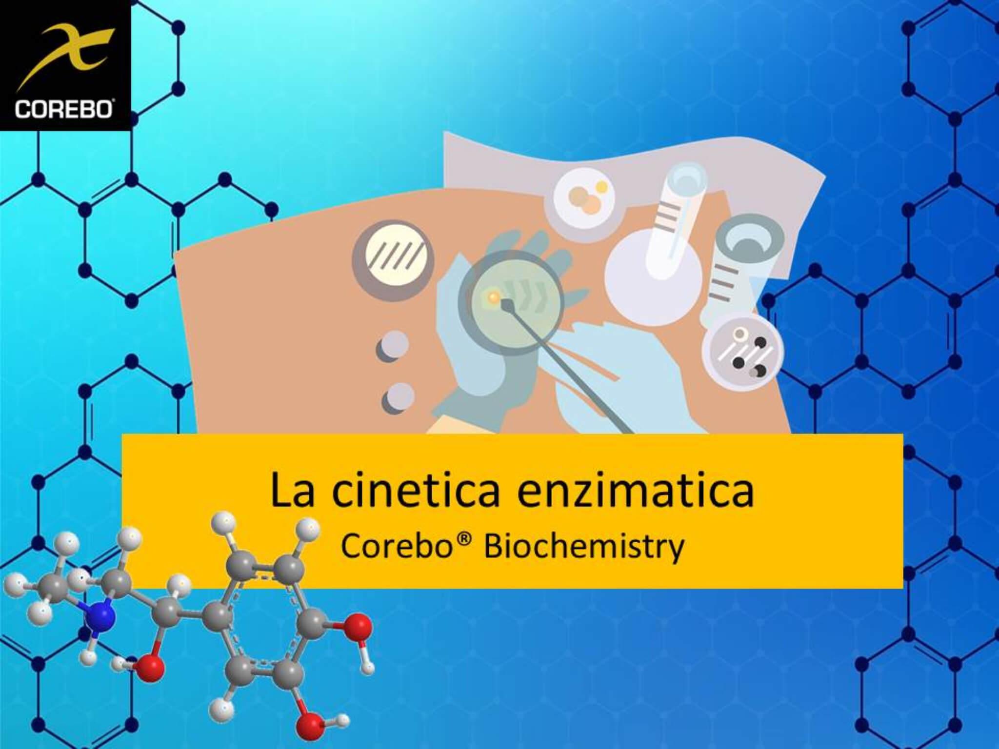cinematica degli enzimi