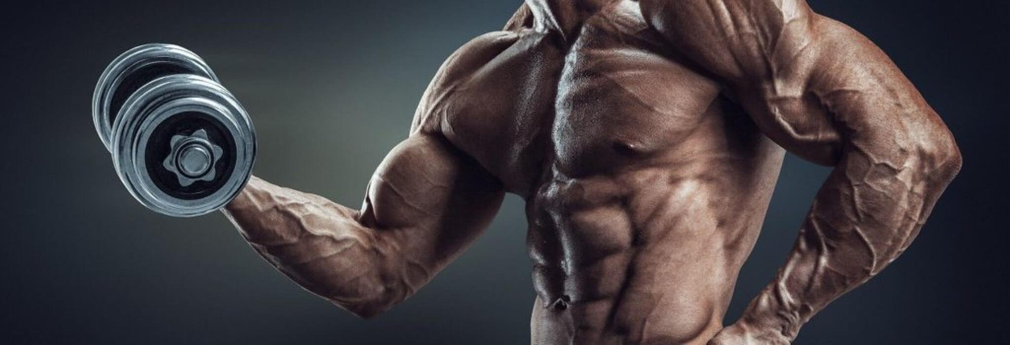 I FANS aumentano l'ipertrofia muscolare