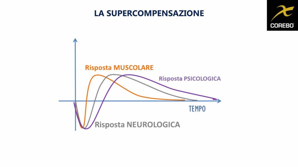 Le diverse curve della supercompensazione in allenamento