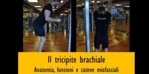 Tricipite brachiale: anatomia, funzioni e catene miofasciali