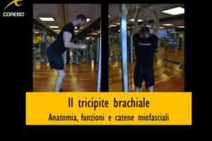 Tricipite brachiale, anatomia, funzioni e catene miofasciali – Corebo