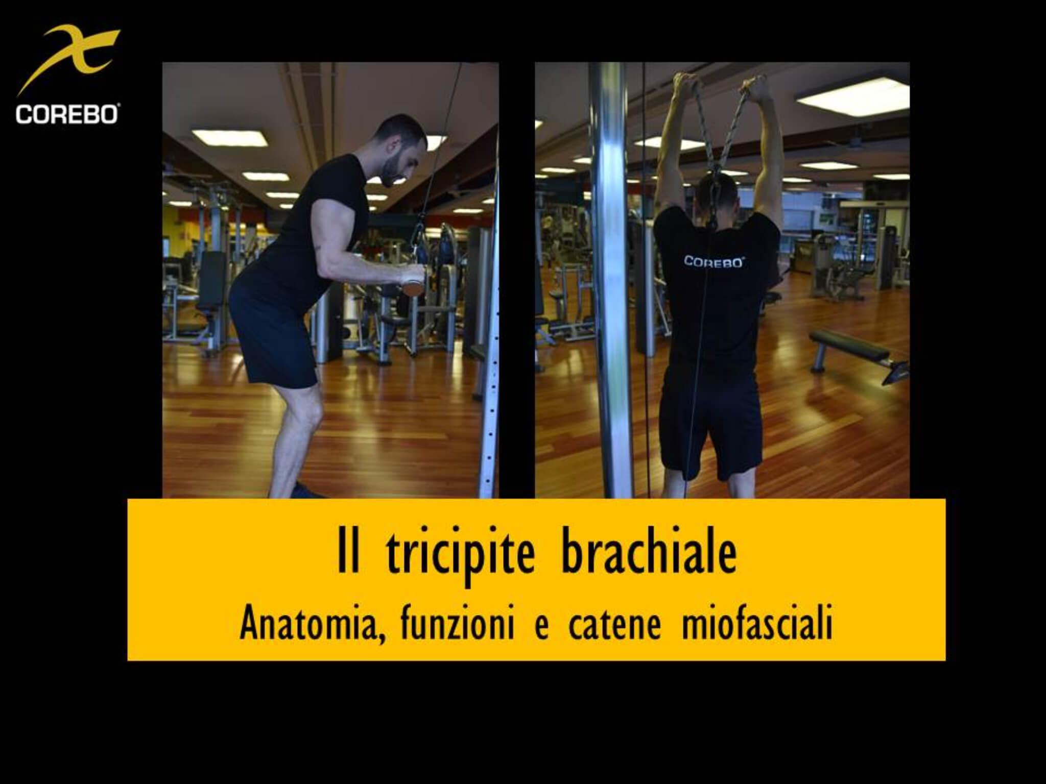 Tricipite brachiale, anatomia, funzioni e catene miofasciali