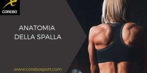 Anatomia della spalla: articolazione ed aspetti muscolari