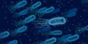 L'aiuto dei batteri per la vita umana