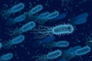 il microbiota umano – Corebo