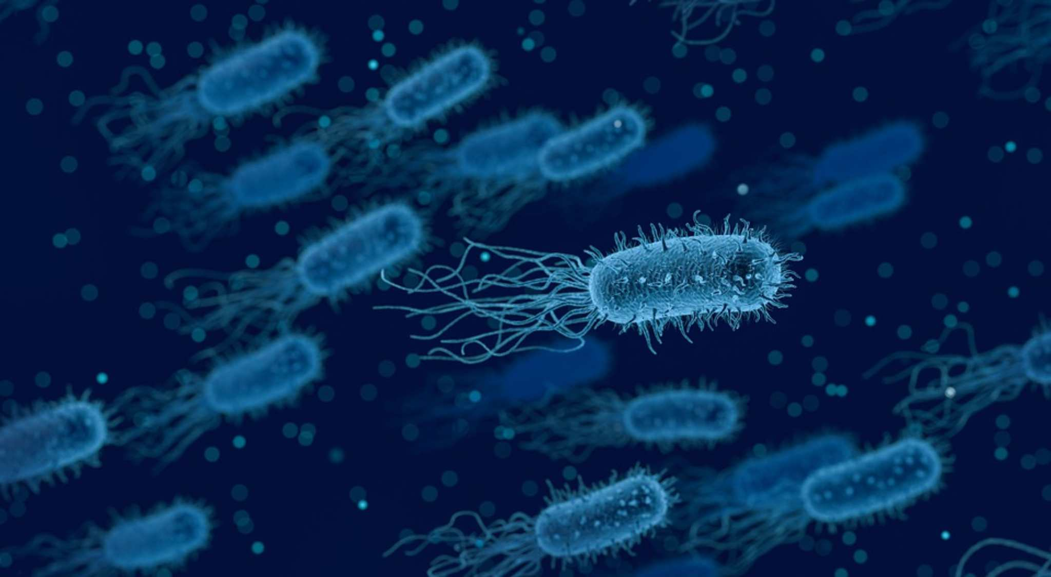 il microbiota umano